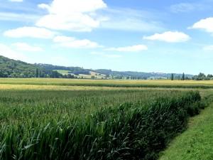 Vorland der Pyrenäen in der Nähe von Pau