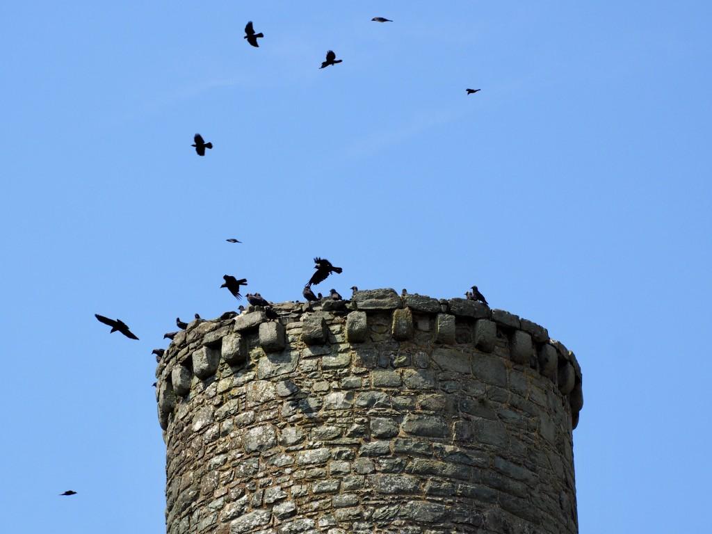 Raben über dem Burgfries von Harlech Castle