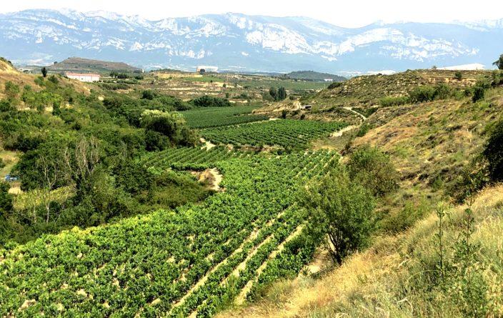 Weinanbau im Rioja-Tal