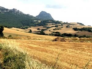Getreidefelder so weit das Auge reicht nahe Logroño
