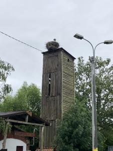 Nest mit Storch in den Masuren