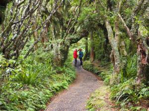 Wanderweg am Mt. Taranaki