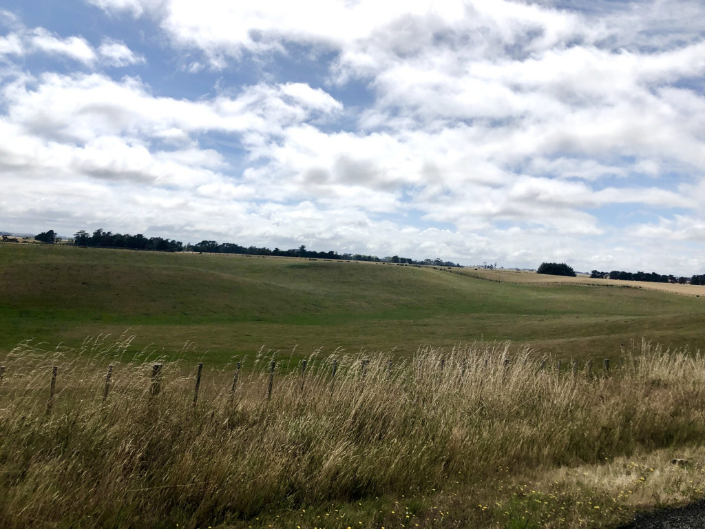 Landschaft auf an der Westküste auf dem Weg nach Wellington