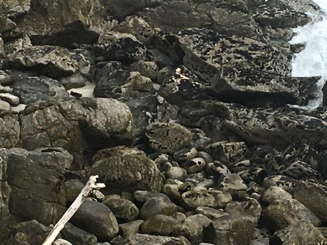 Robbenkolonie bei Cape Fouler