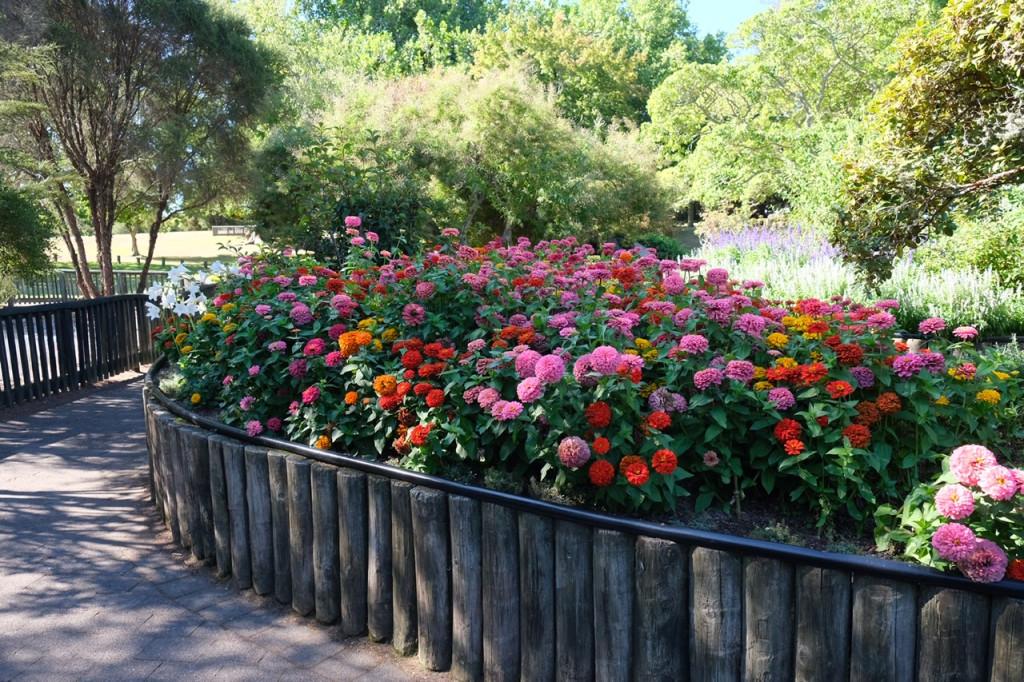 Blumen im Kuirau Park
