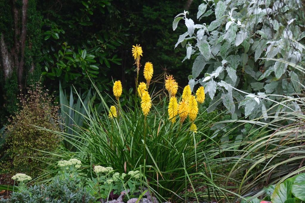 Pflanzen im Schlossgarten