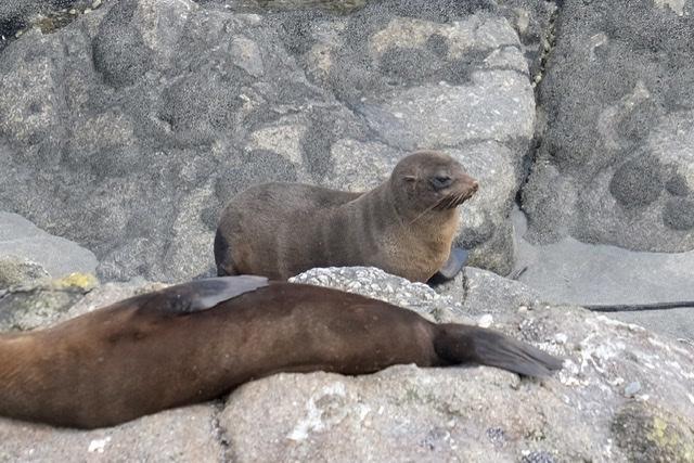 Robben beim relaxen