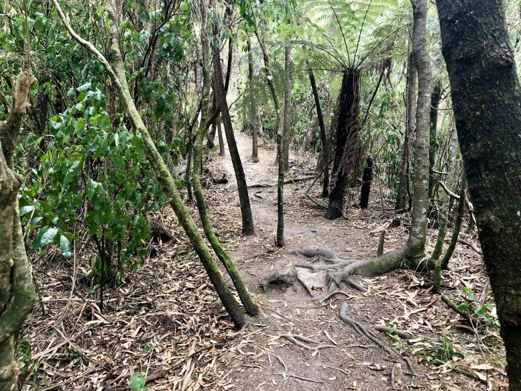 Auf den Weg zum Aussichtspunkt der Putangirua Pinnacles