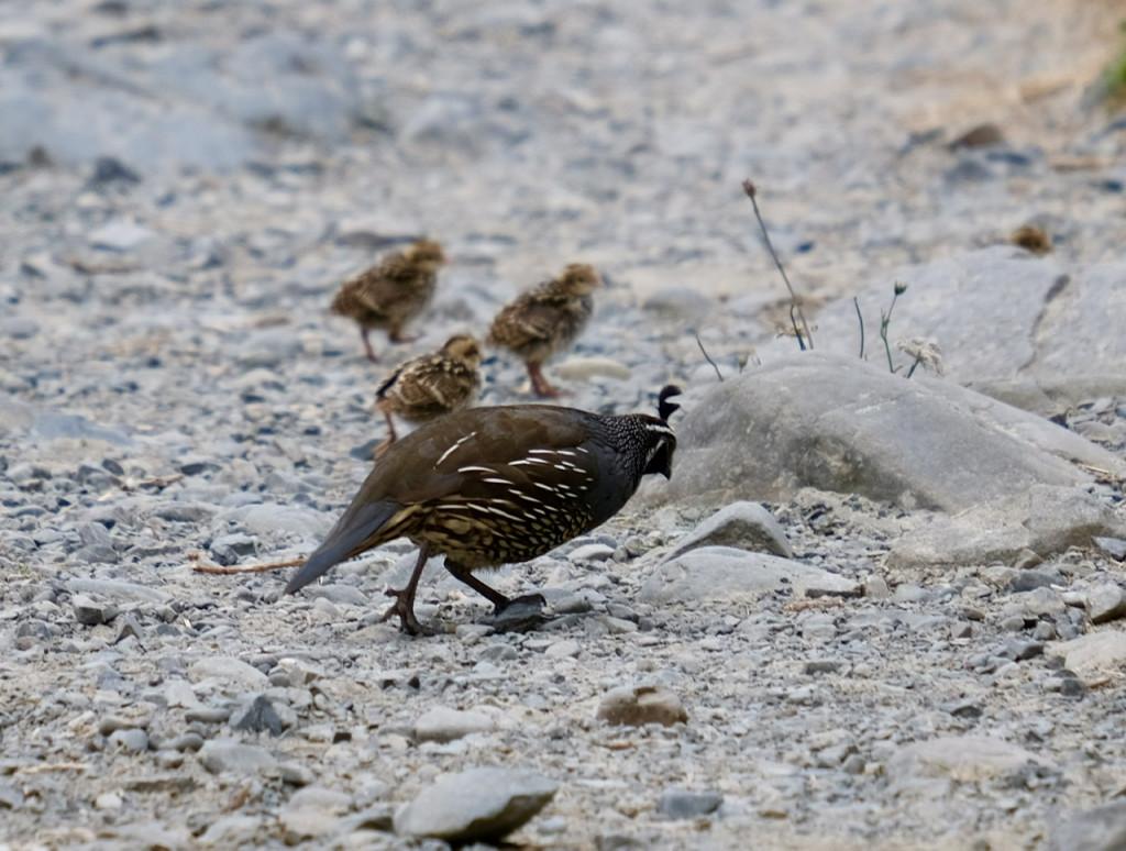 Vogelfamilie am Wegesrand