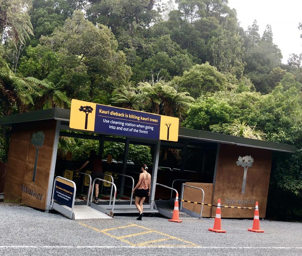 """""""Schuh-Waschanlage""""am Waipoua Forest"""