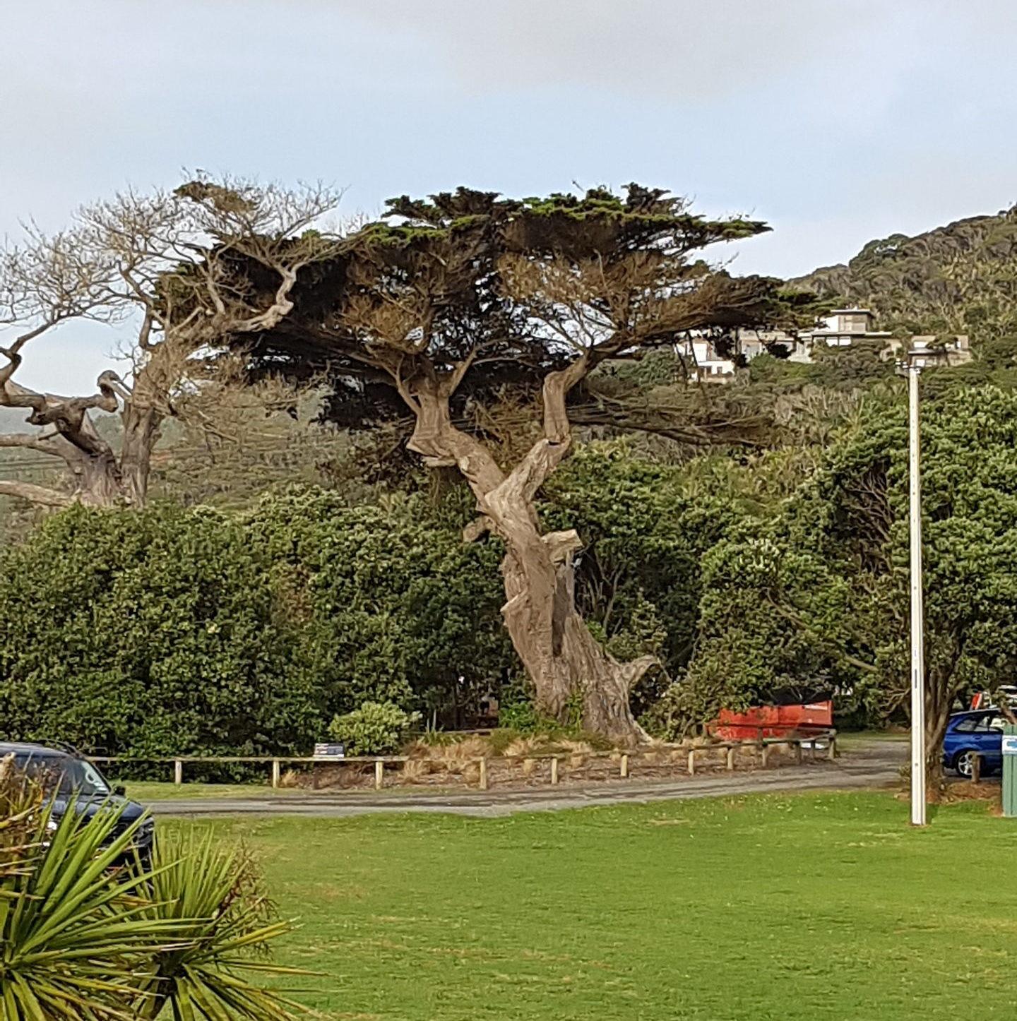 Baum auf CP