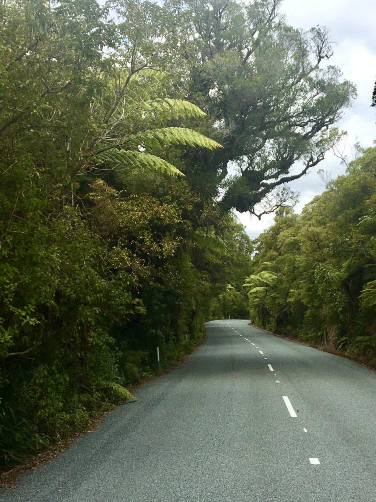 N 12 durch den Waipoua Forest