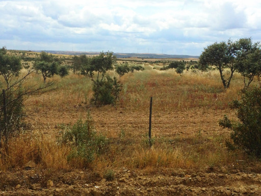 Region Alentejo, nahe Almodôvar