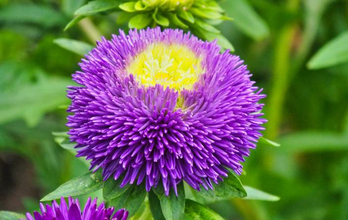 Eden Project - Eindrucksvolle Blumenpracht