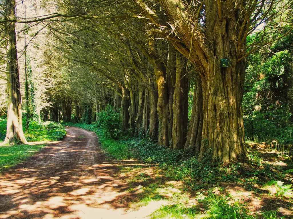 Klostergarten auf der Insel Caldey