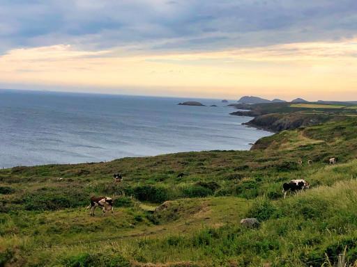 Blick vom CP bei St. David's über die Caerfai Bay