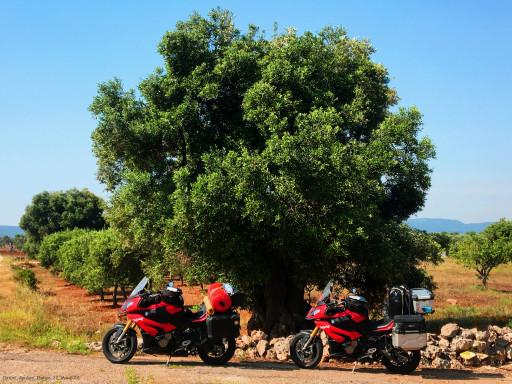 Olivenbaum mit Moppeds in Apulien