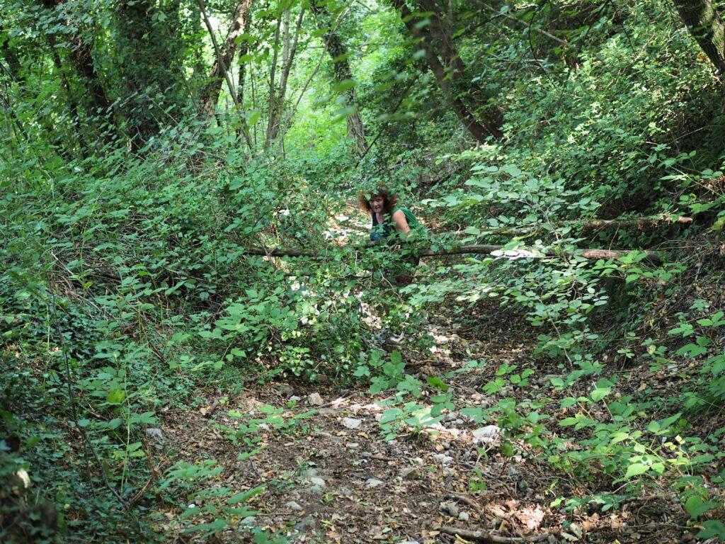 Mühsames Geturne durchs Unterholz