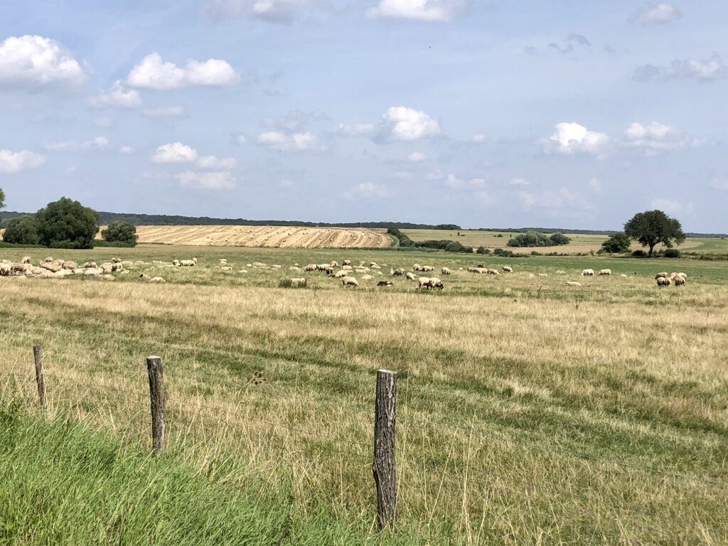 Landschaft bei Avricourt in Lothringen