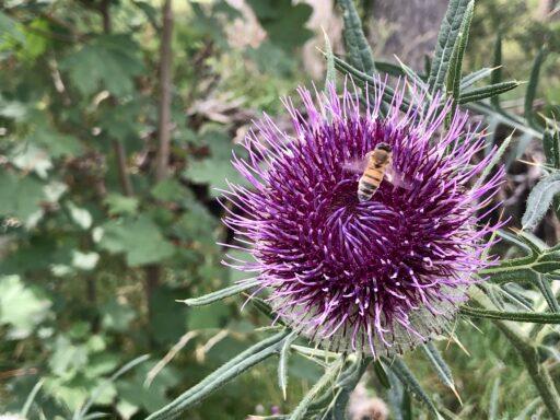 Auffällige Flora am Wegesrand nahe Mazet-Saint-Voy