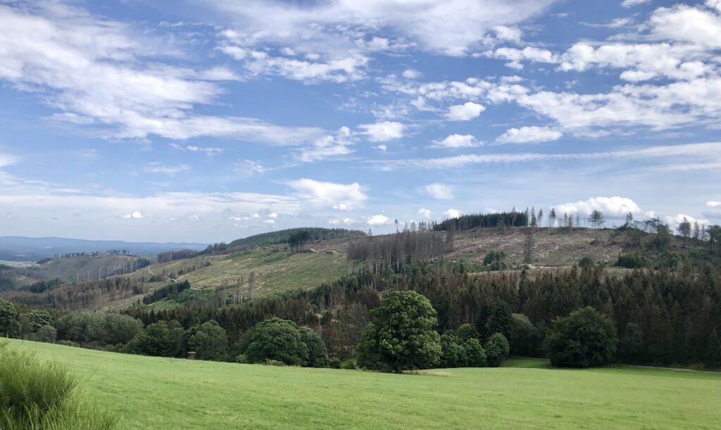 Waldschäden in der Region Bad Berleburg