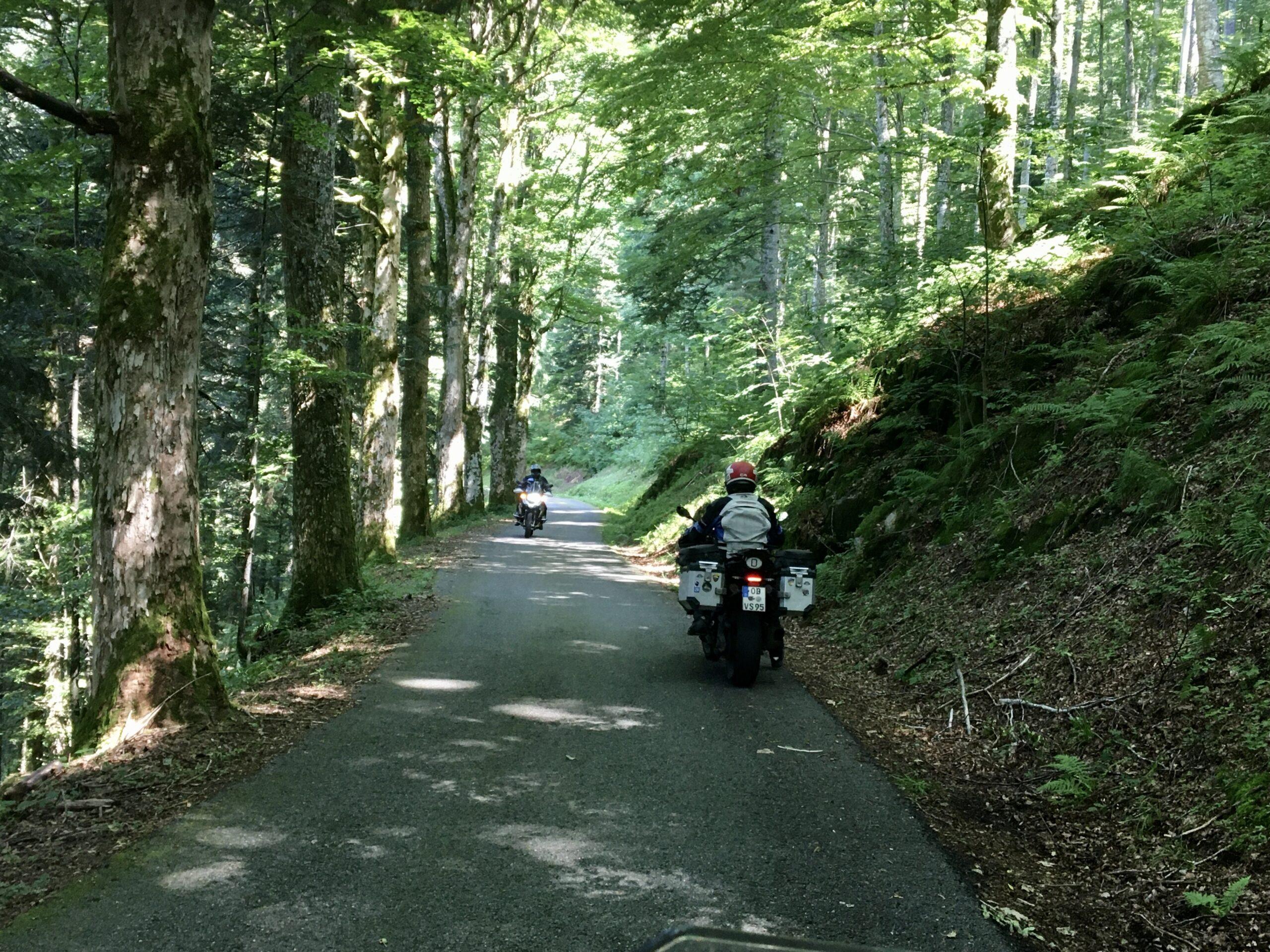 """""""Fuchsschwänzle-Weg"""" von Herrenschwand nach Schönau"""