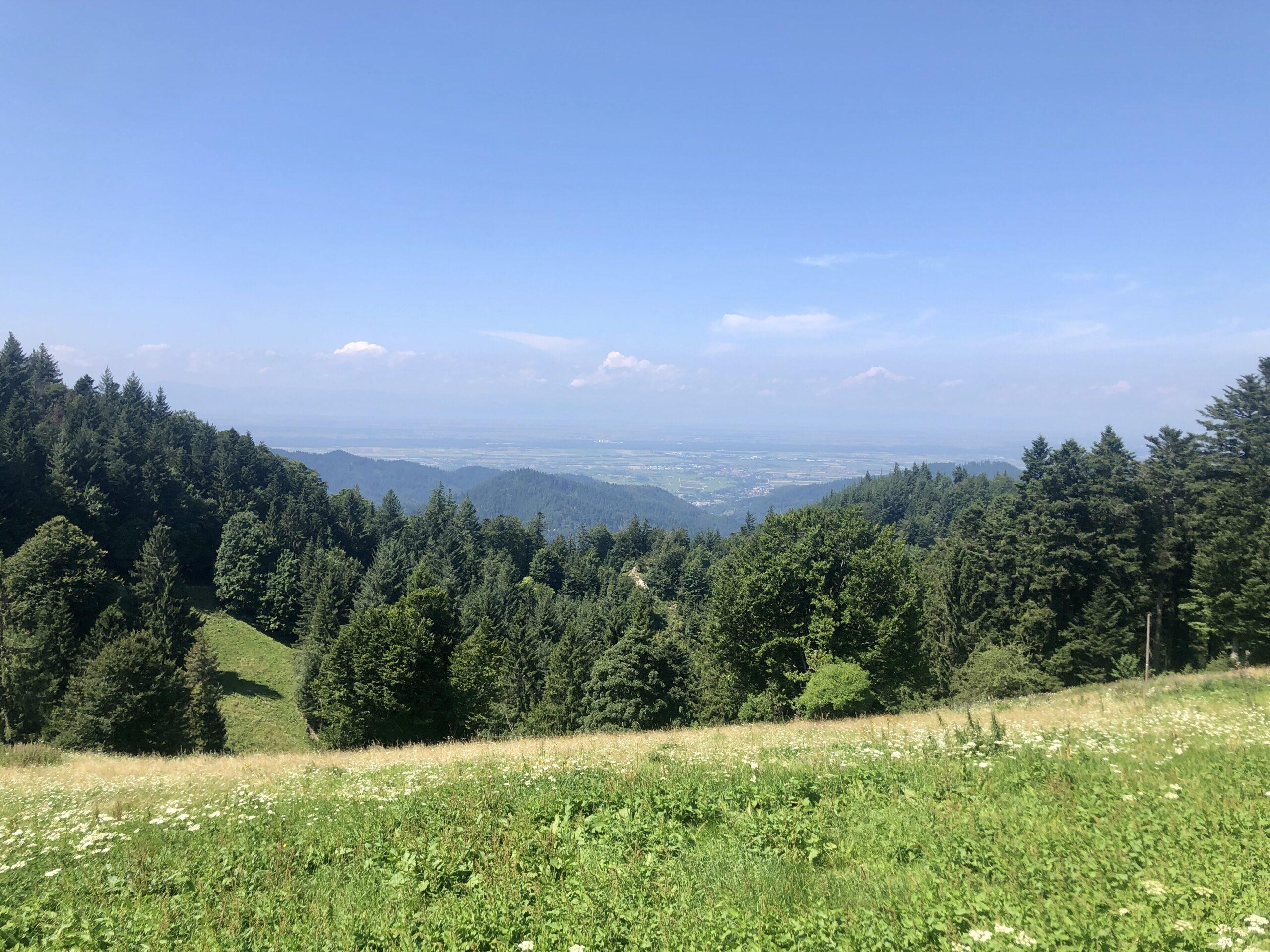 Blick vom Schwarzwald Richtung Rhein